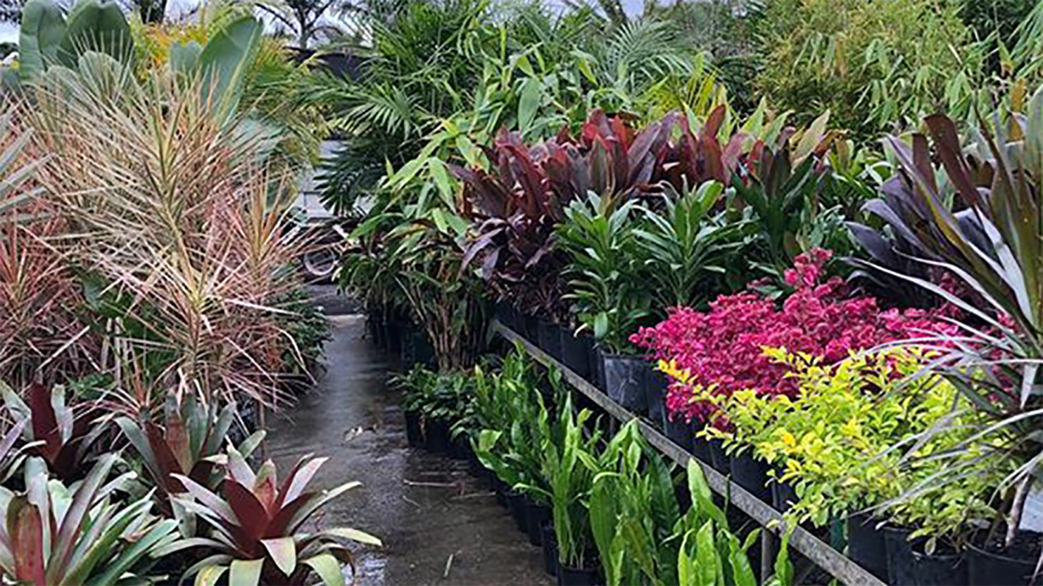 Exotic Nursery Shoalhaven – Bamboo South Coast