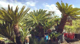 Popular Landscaping Plants