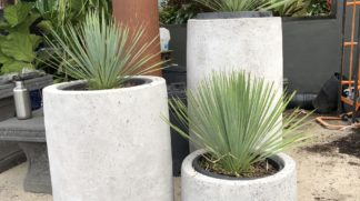 Light Concrete planters cannon