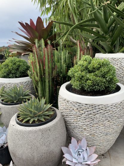 Mixing white pebble with other pots is stunning