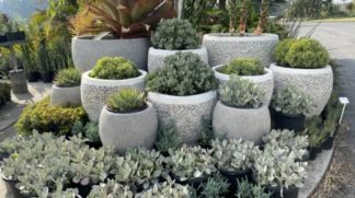 White Pebble pot display