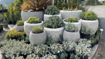 White Pebble pot display