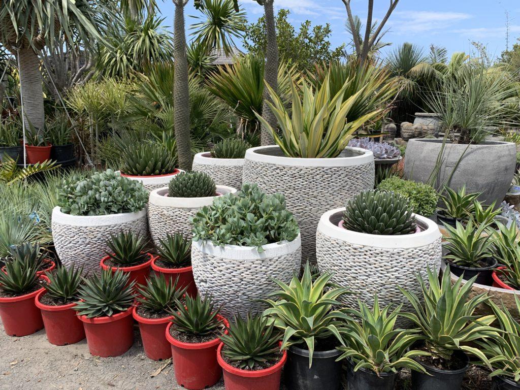 Mixed display of pebble white pots