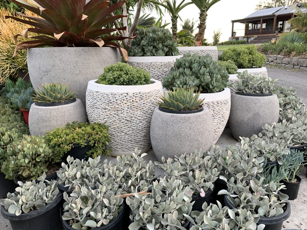 Mixture of white pebble and smooth concrete pots