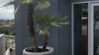 90cm Slate pot planter featuring Chamaerops