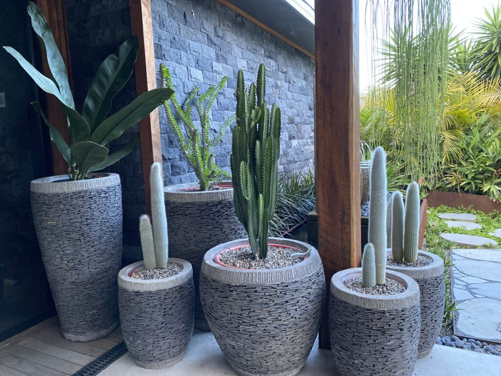 Slate pot cluster with mixed cacti