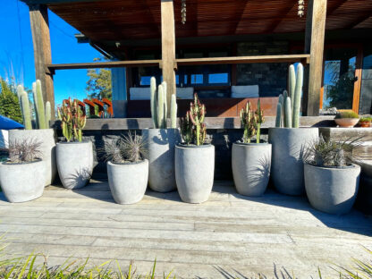 Pots with cactus NO MAINTENANCE!